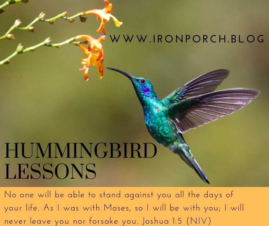 Hummingbird graphics